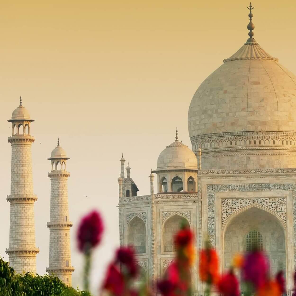 Taj Mahal behind flowers