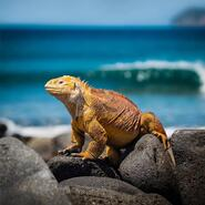 Lizard-photo-resize