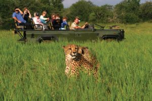 Game Viewing in Hwange Nationalpark