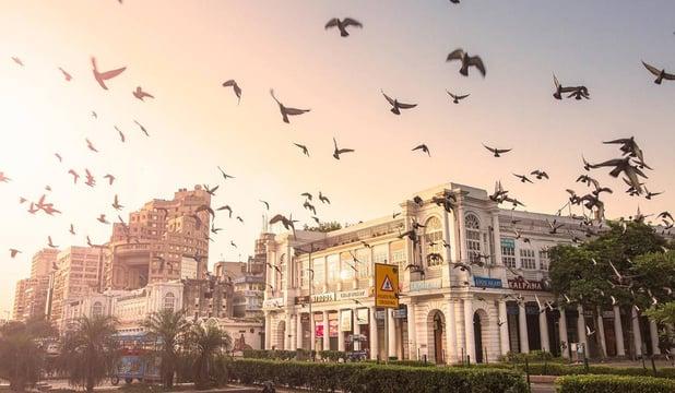 New Delhi Birds