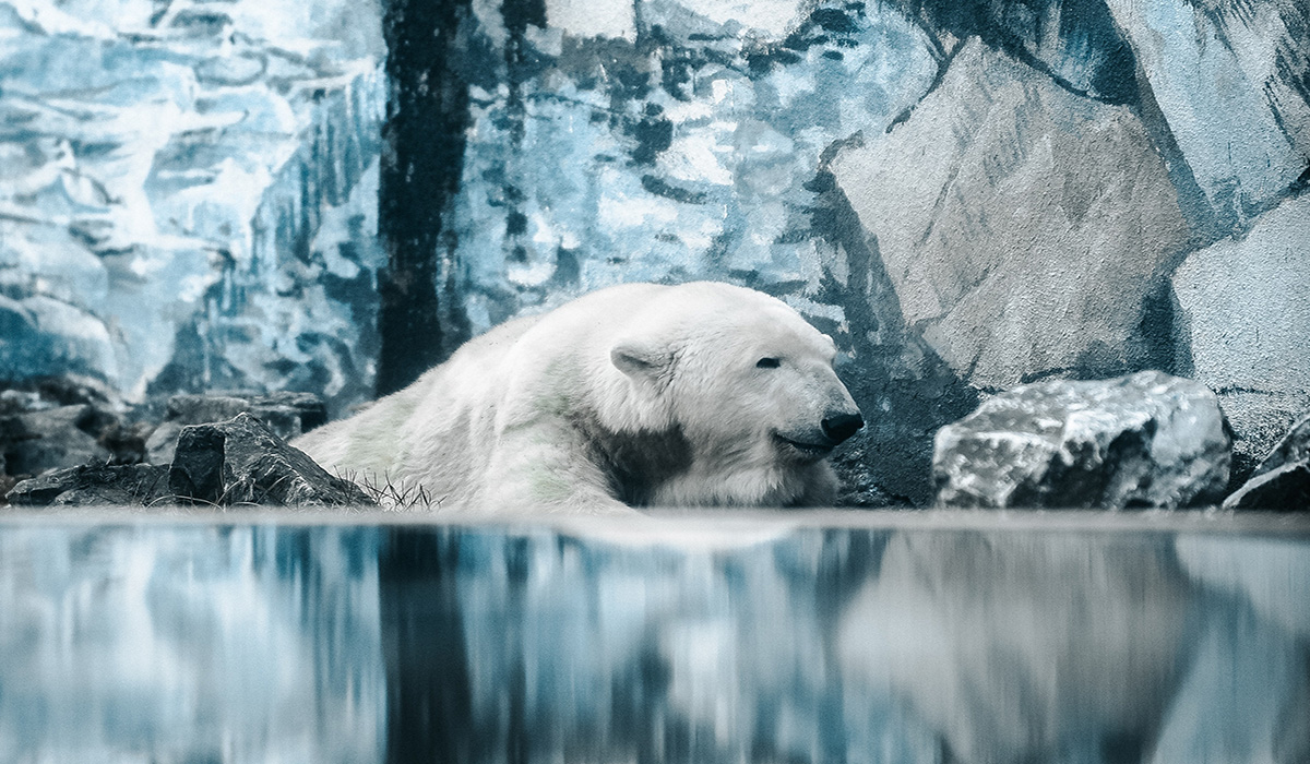 Polar Bear 1200x700