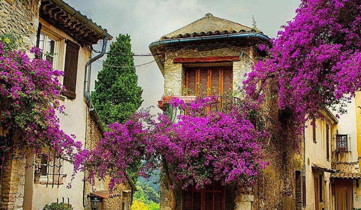 Provence-1