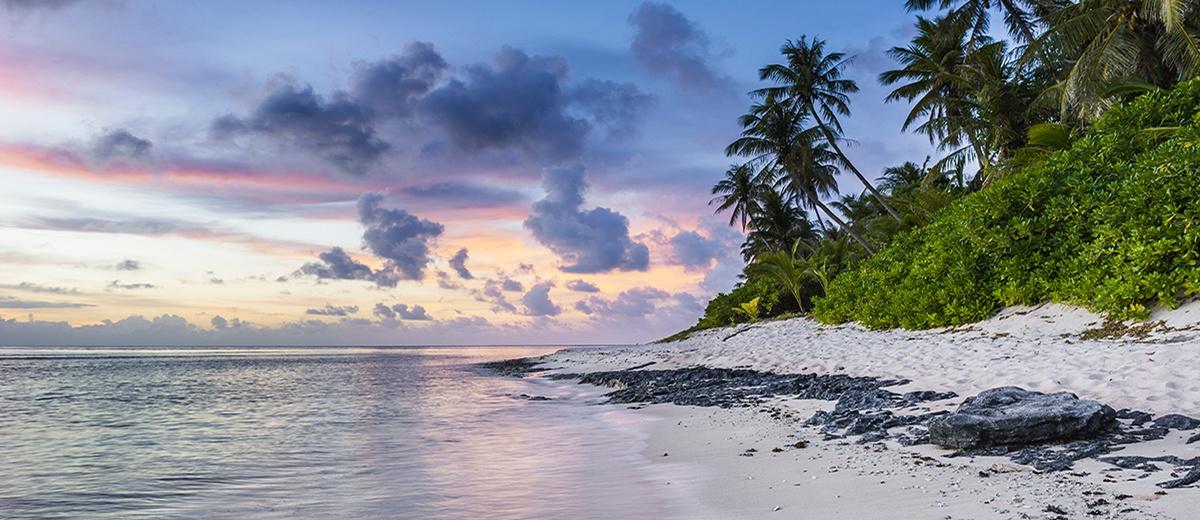 tropical sunset on beach palm trees