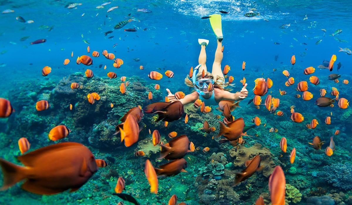 bright-fish-snorkel-australia