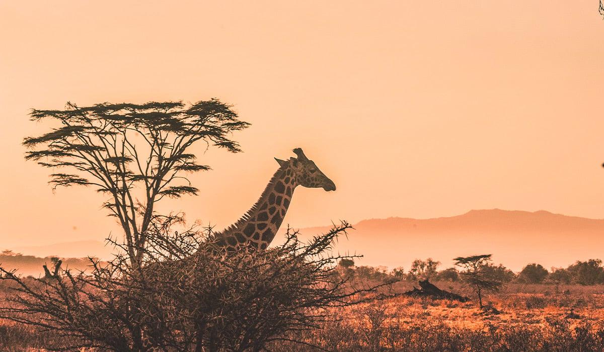 regentAfrica