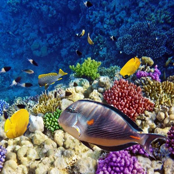 website-blog-windstar-tropical-fish