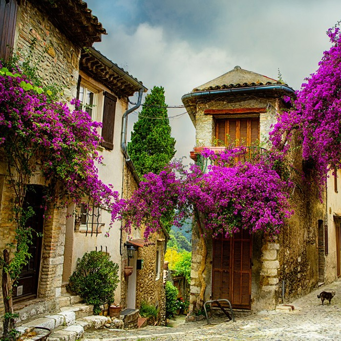 Colors of Provence France Bougainvillea on Buildings