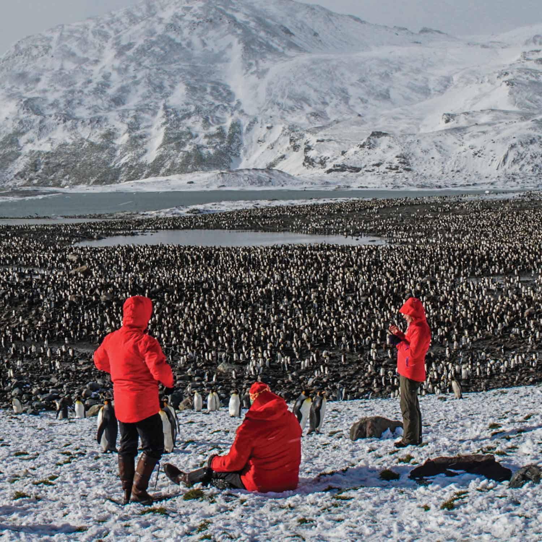 silversea-penguins-1500