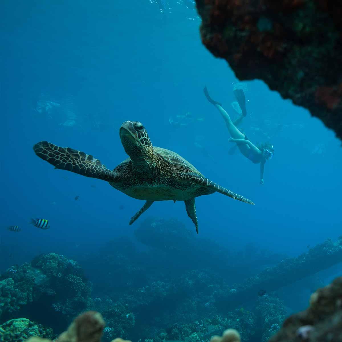 uncruise-turtle-1200